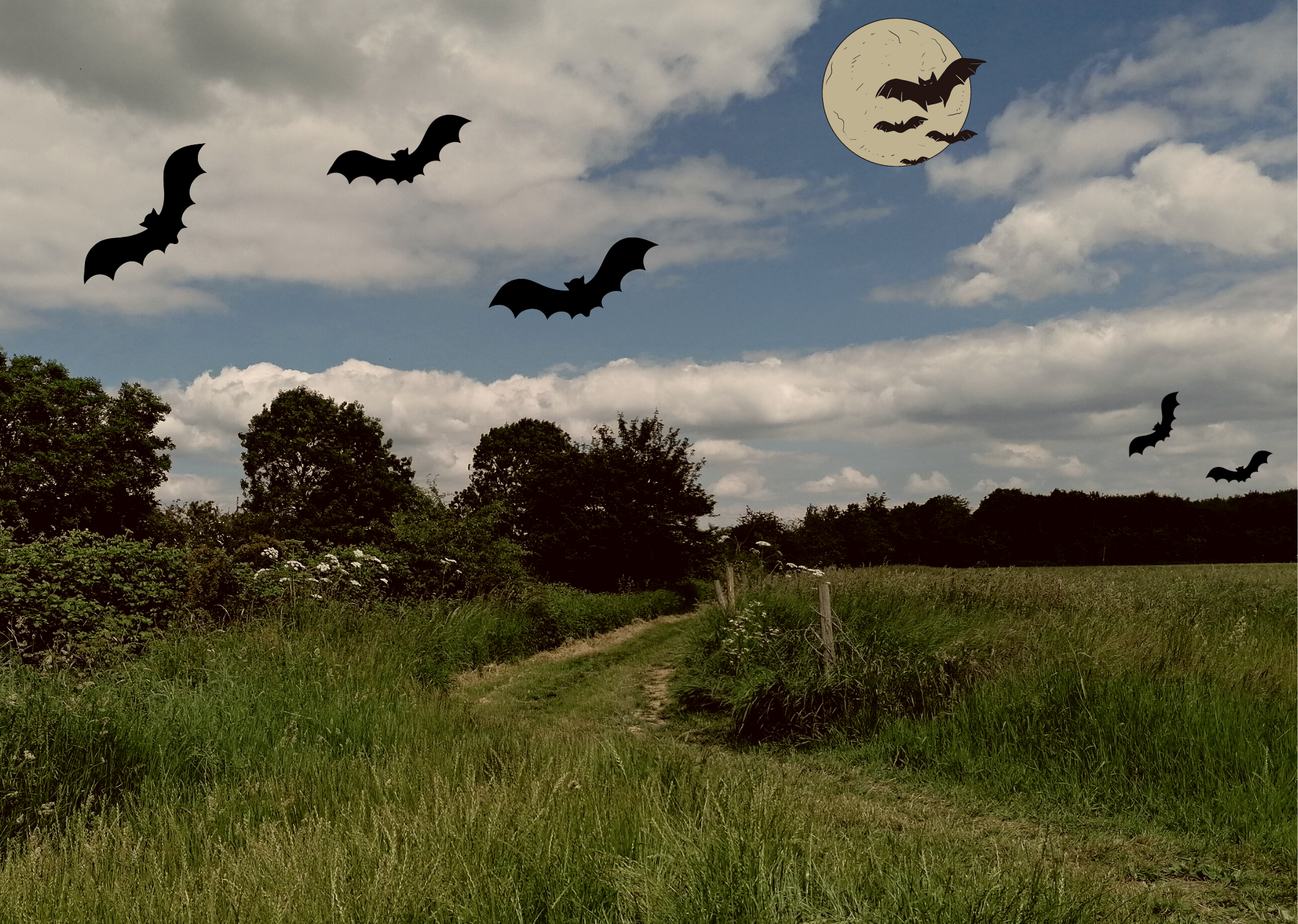 Bats flying over a field